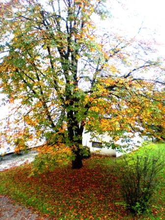 automne.JPG