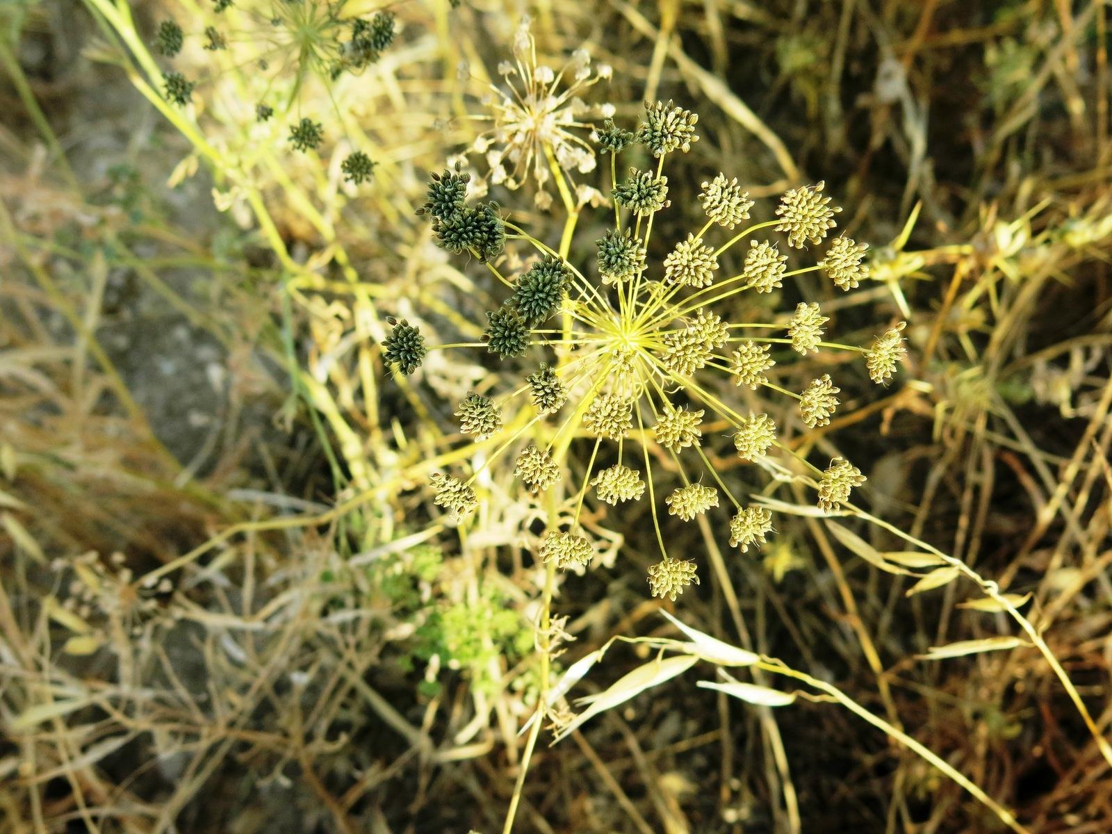 terre sainte en israel Faune et flore Fleur des champs