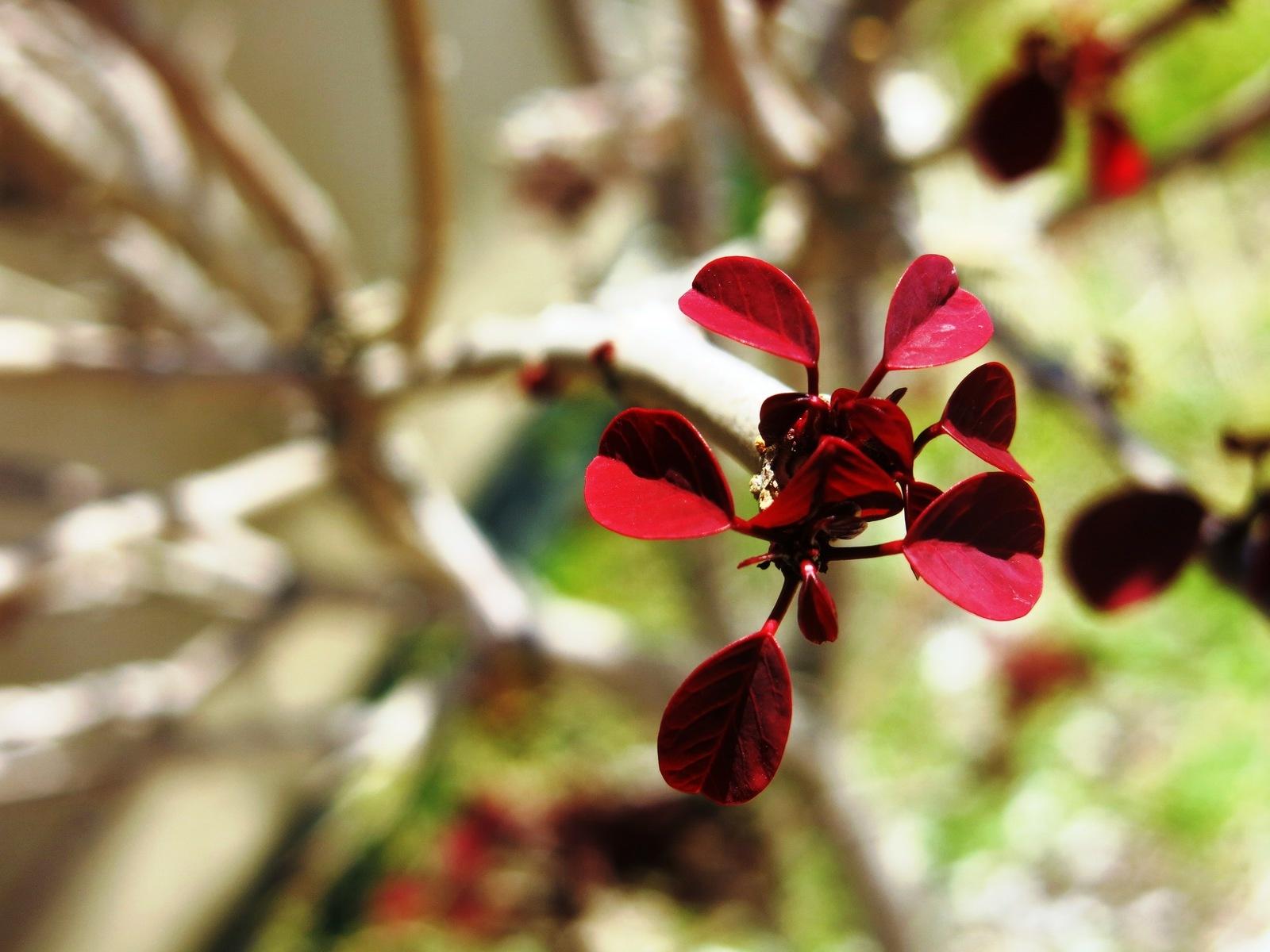terre sainte en israel Faune et flore Feuille rouge