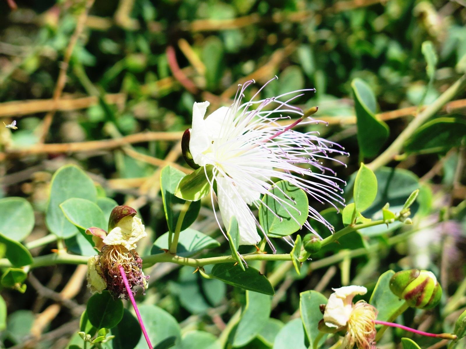 Terre sainte en Israël #3 – Faune et flore