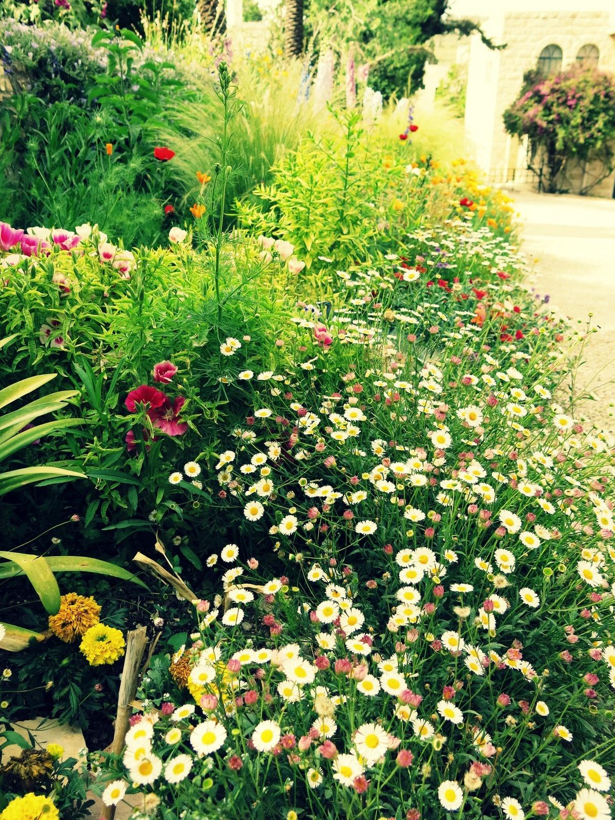 terre sainte en israel Faune et flore Comme une oasis de fleurs