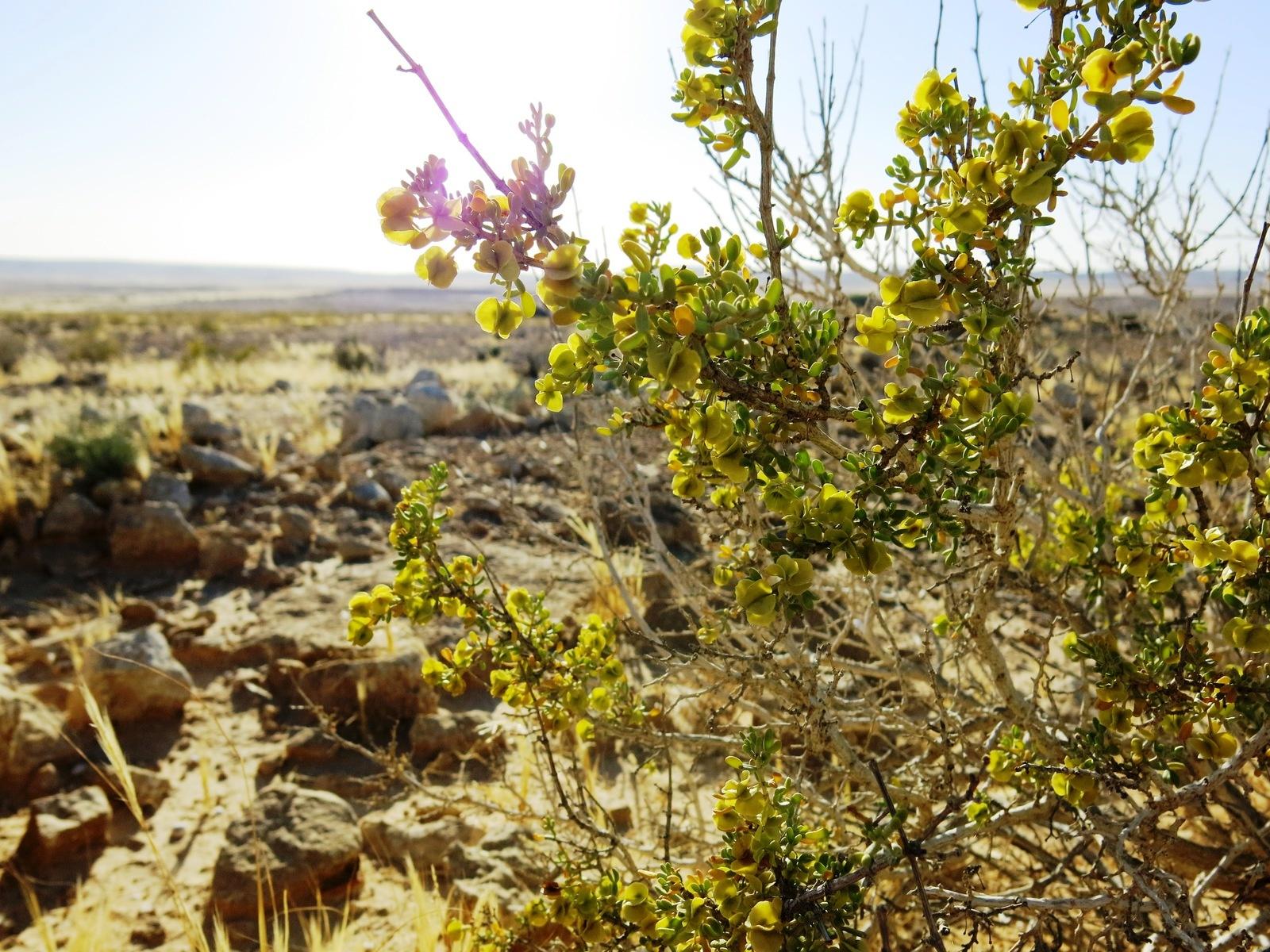 terre sainte en israel Faune et flore Dans le désert