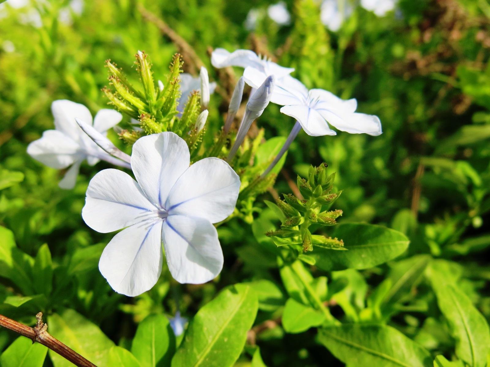 terre sainte en israel Faune et flore Jolie fleur blanche