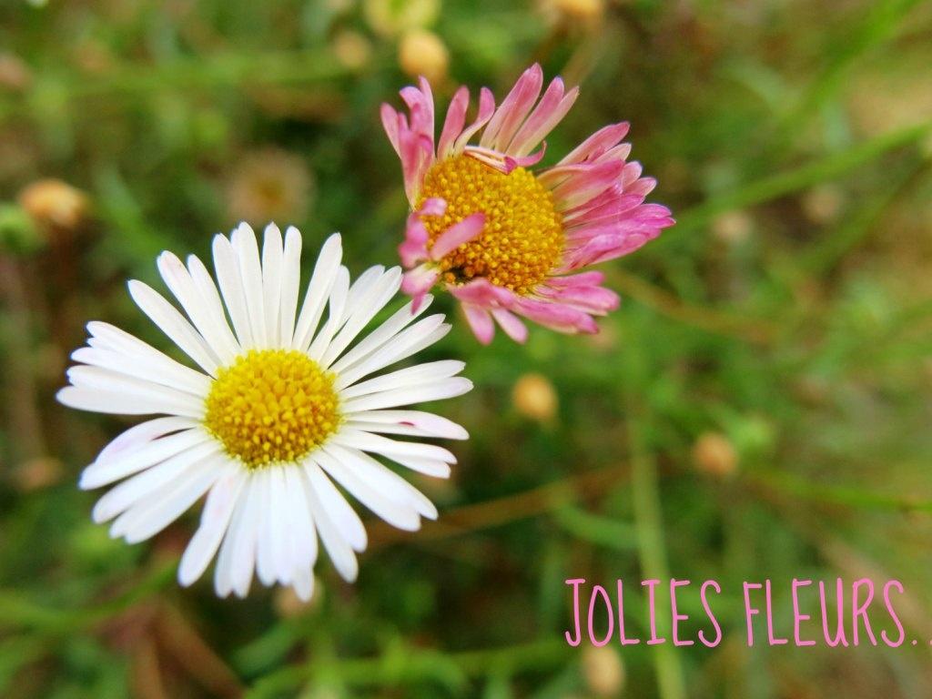 Été 2014 fleurs