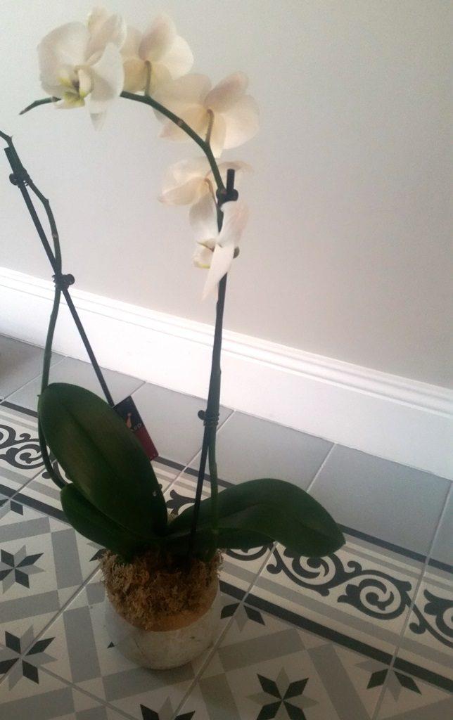 Orchidée pot en béton et doré