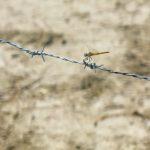 libellule-méjanes
