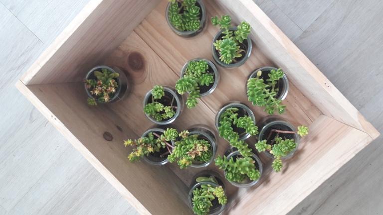 pot de succulentes Pimprelys 2