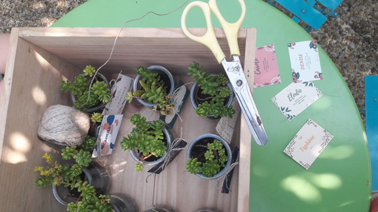 pot de succulentes Pimprelys 3
