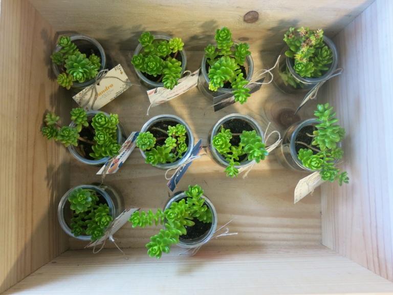 pot de succulentes Pimprelys 5