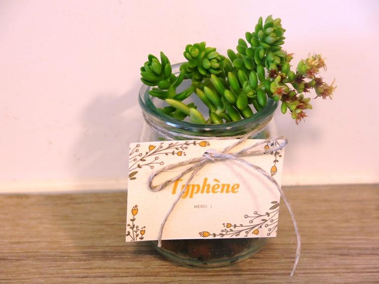 pot de succulentes Pimprelys 7