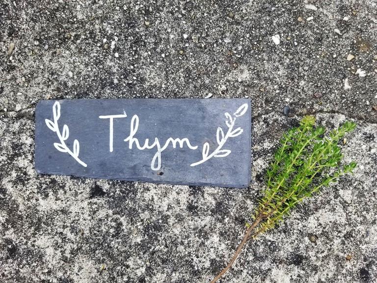 cultiver du thym
